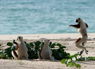 Мадагаскар отдых
