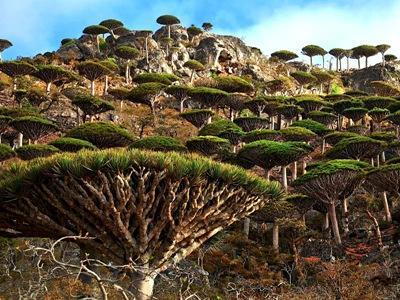 Isla de Socotra