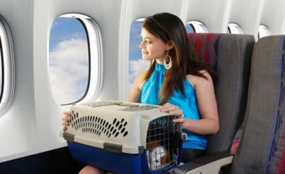 Перевозка животных
