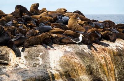 Остров морских котиков